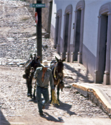 Cowboy walking horses up quiet street in Batopilas