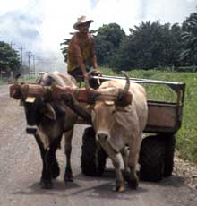 Oxcart in Costa Rica.