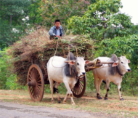 Oxcart in Myanmar