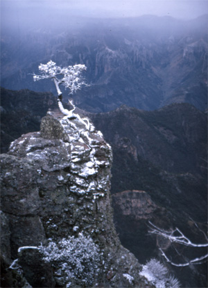 A little holiday snow in the high country of Mexico's Copper Canyon creates a perfect Christmas Card.
