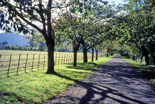 ireland_path