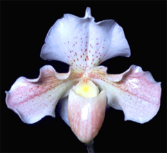 In Costa Rica, orchids are the national flower.