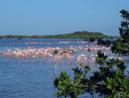 Flamingos in Yucatan, Mexico